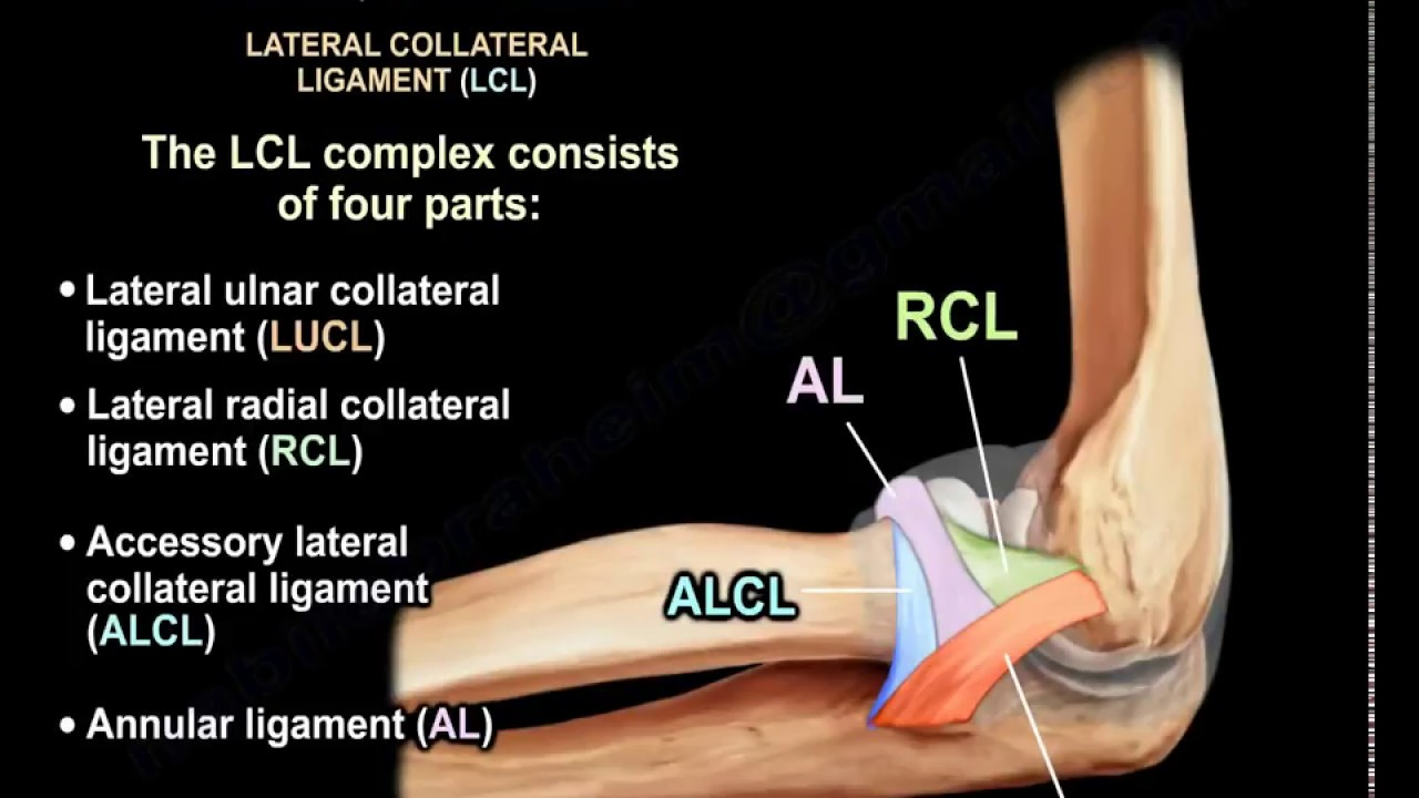 Ligaments Of The Elbow Stability Of The Elbow Everything You Need