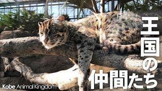 『神戸どうぶつ王国』神戸市中央区 お昼寝中のスナドリネコさんに動きま...