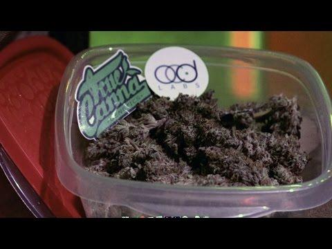 2014 HIGH TIMES Amsterdam Cannabis Cup: Highlights Part 2