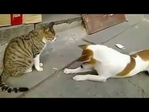 Pablo - Dog's Sleep Farts Makes Cat Angry
