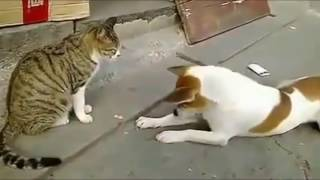 Download Angry Cats VS Dogs Funny Compilation 2017 !!!