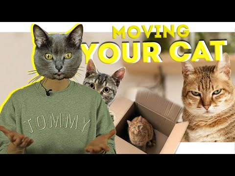 MOVING TIPS | MOVING YOUR CAT | MOVING HACKS 2020