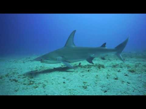 Emerald Beach With Jupiter Concierge Diving