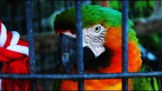 FREE Bird Stock Footage!!!! Download Now!!!