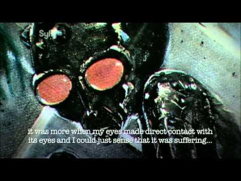 UFO Files - The Brazilian UFO Crash: The Varginha Incident
