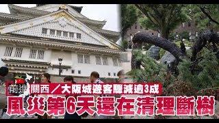 【前進關西】大阪城遊客驟減 清理大量斷樹最頭痛   台灣蘋果日報
