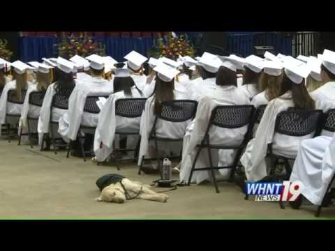 Student's service dog attends graduation in cap and gown