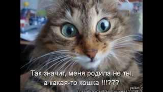 смешные фото с кошками