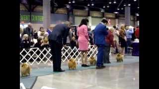 Pomeranian -seattle Kennel Club-