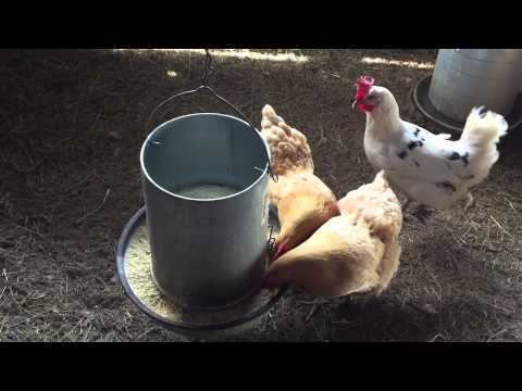 What is the cost of producing non-GMO free range eggs?