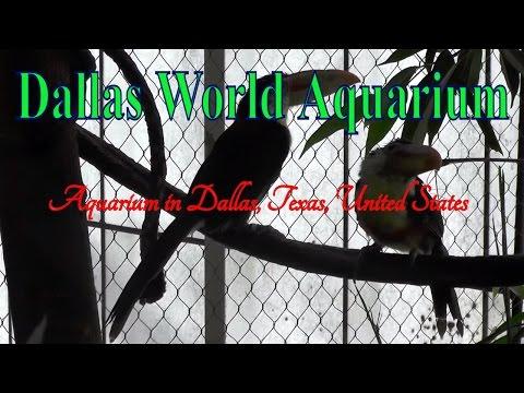 Visit Dallas World Aquarium, Aquarium in Dallas, Texas, United States