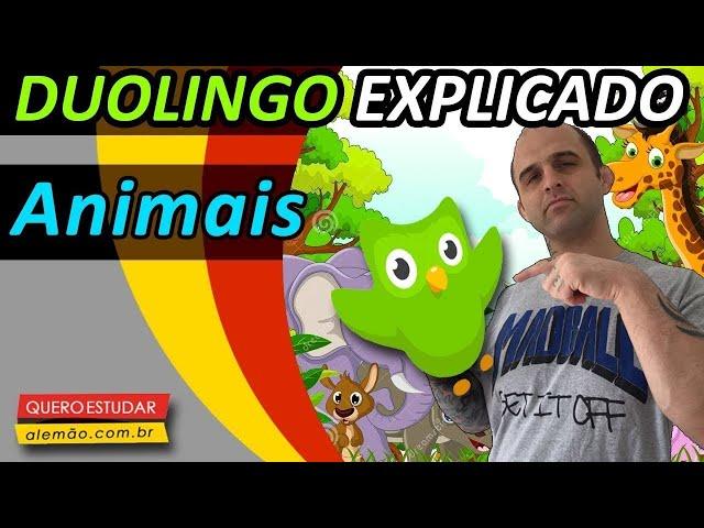 #12 - Curso de alemão gratuito para iniciantes - Animais - Duolingo Explicado -