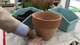 [식물vlog] 튤립 구근 심기 - 실내 베란다 가드닝…