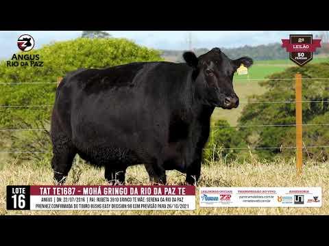 LOTE 16 TE1687 MOHÁ GRINGO DA RIO DA PAZ - Prod. Agência e TV El Campo
