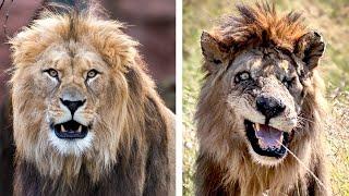 Что ПРИРОДА делает с Животными ОДИНОЧКАМИ