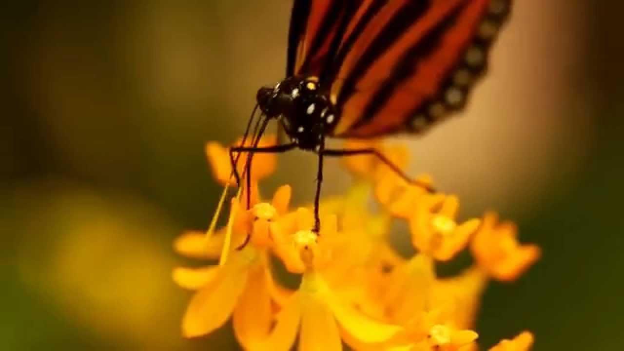 Schmetterlinge Im Botanischen Garten Augsburg Youtube