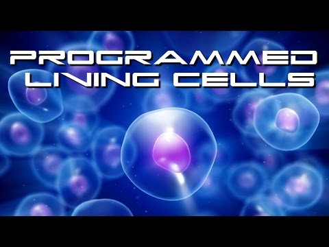 Biologists Build Software That Programs Living Cells Like A Computer - BTF