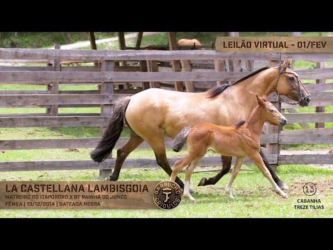 Lote 44 - La Castellana Lambisgoia