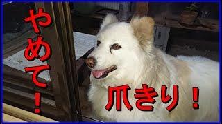 みなさん、こんばんは。 先日、nanacoさんが爪きりしてきましたので、 ...