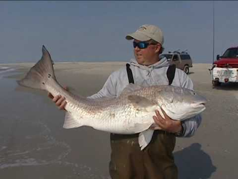 Surf Fishing For Red Drum