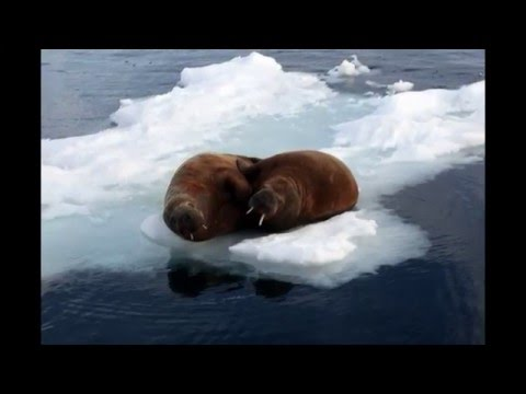 Franz Josef Land - archipelago in Arctic Russia. HD Travel.