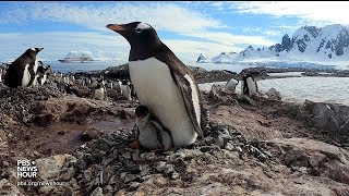 360 video: Go inside a penguin colony in Antarctica