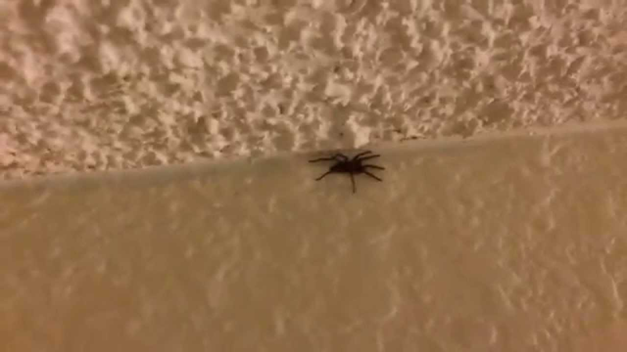 Huge Spider on the Ceiling - YouTube