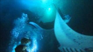 Manta ray madness in Hawaii - Amazing dive