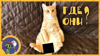 Котик Печенька в опасности! Удаляем опухоли Печеньке.