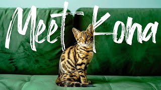 Bengal Kitten First Day Home || SHE WONT STOP MEOWING!! Helpful Tips at the end!!!!