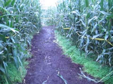 Jeffrey navigates a corn maze