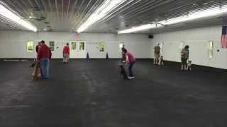 World Class Dog Kennels, Group Obedience Classes, Chicago Il.