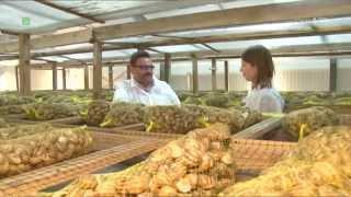 Granja de Caracoles Helix Aspersa Muller. Grudziądz Hodowla Jadalnych Ślimaków Afrykańskich.