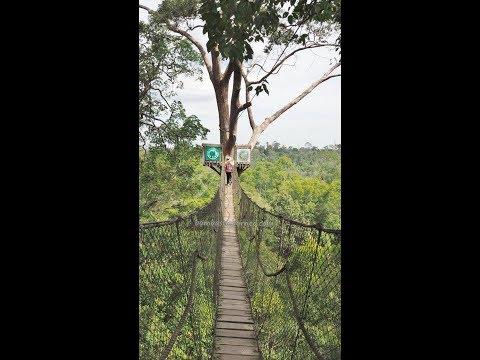 Obyek Wisata Alam Bukit Bangkirai, Canopy Bridge Balikpapan East Kalimantan