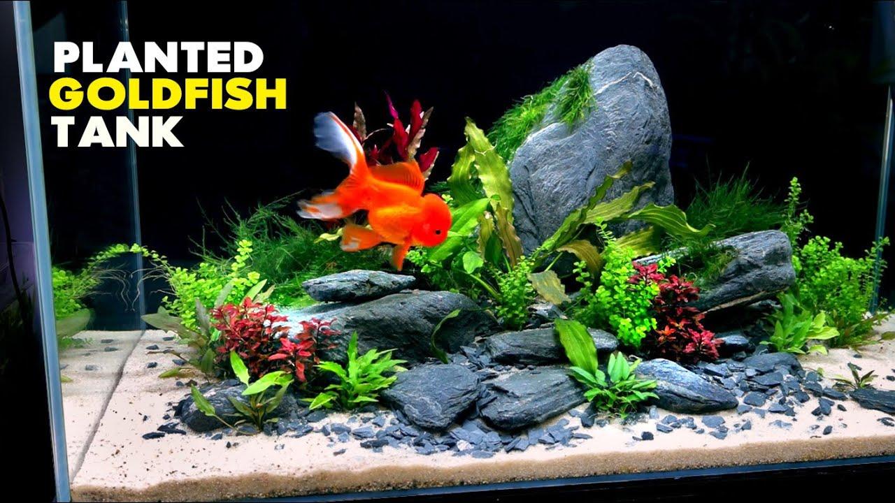 Aquascape Tutorial: Fancy Goldfish Planted Aquarium (How To: Step by Step Build Guide)