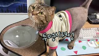 [냥품리뷰] 컴퓨터 방해하는 고양이 수납을 위한 투명해…