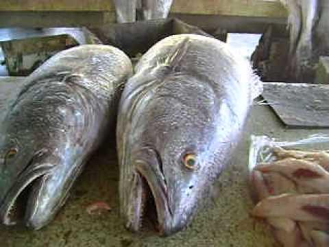 Mauritania Fish Bazaar in Nouakchott