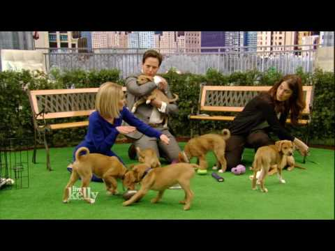 Puppy Training Do's and Don'ts with Andrea Arden
