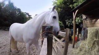 Ce cheval va faire un truc fou - ZAPPING SAUVAGE