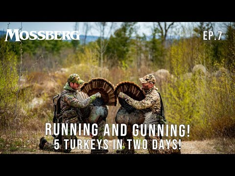 5 Long Beards in 2 Days! | New Hampshire Turkey Hunting