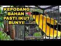 Kepodang Emas Gacor Cocok Buat Masteran Dan Pancingan Burung Malas Bunyi  Mp3 - Mp4 Download