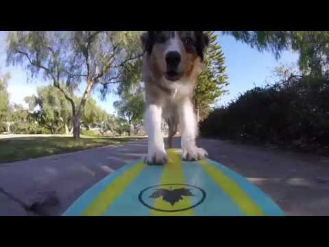 How To Train Your Dog To Ride A Skateboard