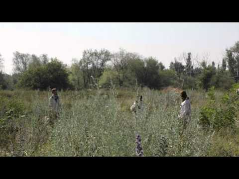 Однажды в Газе   HD 1080p Video Sharing