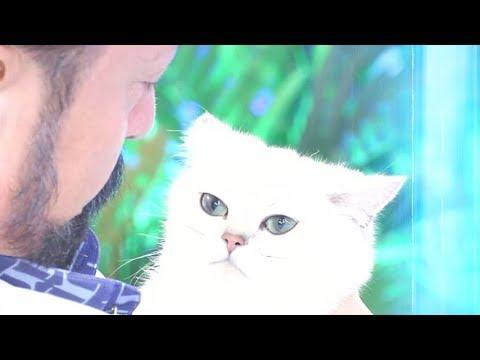 Adnan Oktar'ın yeni prensesi kedicik Luna