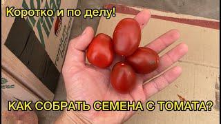 Сбор семян томата - БЫСТРО и ПРОСТО!