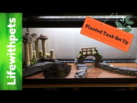 How To Set Up A 20 Gallon Planted Aquarium (Low Tech)