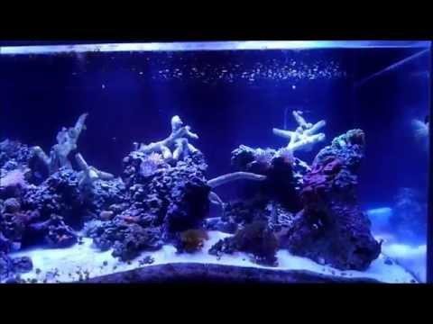 Custom Saltwater Aquarium   Aquarium Installation