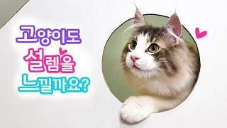고양이도 설렘을 느낄까요?