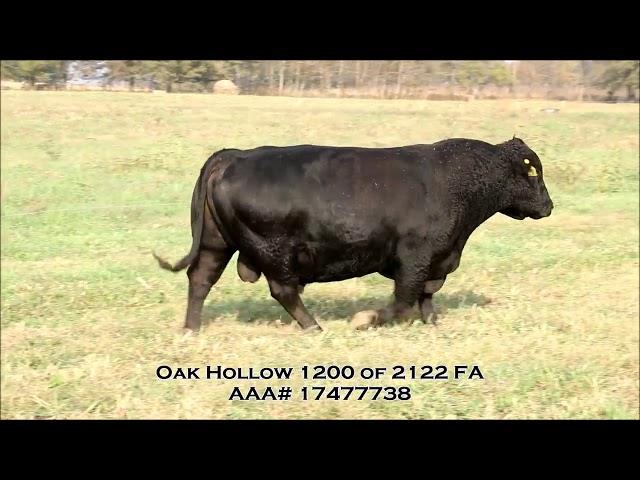 Oak Hollow Reference Sire Oak Hollow 1200 OF 2122 FA