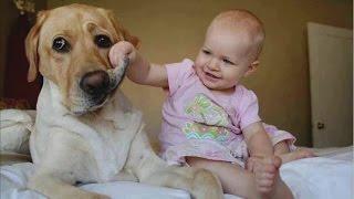 Прикольные видео про детей  Детки - няшки, зверушки -  милашки(Прикольные видео про детей, играющих с домашними питомцами смотреть одно удовольствие! Чудеса изобретате..., 2015-06-21T12:38:15.000Z)
